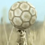 Сурикаты играют в футбол