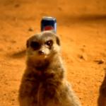 Сурикаты в рекламе Pepsi
